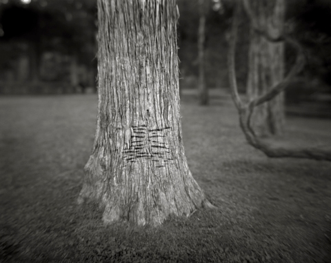 Sally Mann, Rowan Oak